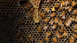 Protéger les abeilles et leur environnement